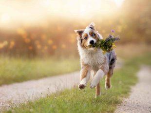 SDV Tierhalterhaftpflicht