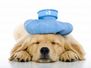Tierkrankenversicherung SDV AG