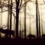 Die Zahl der Wildunfälle nimmt nun rasant zu